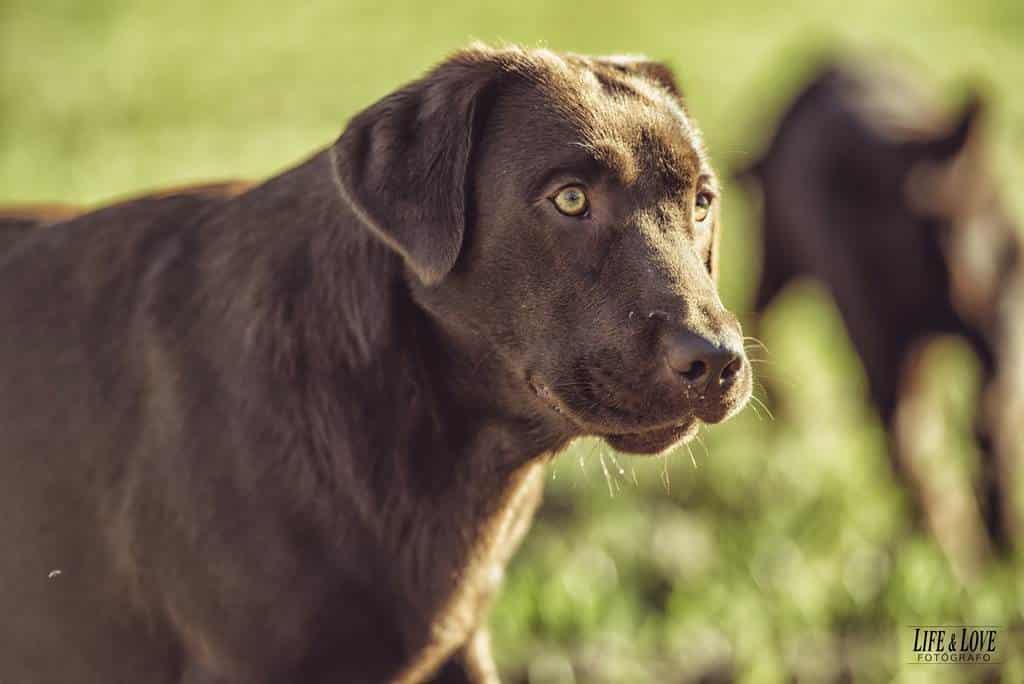 Un día en el campo con los perros