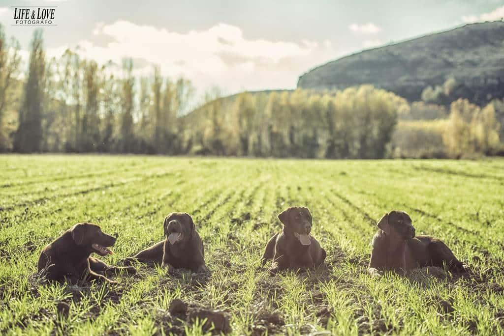 Día de campo con los perros
