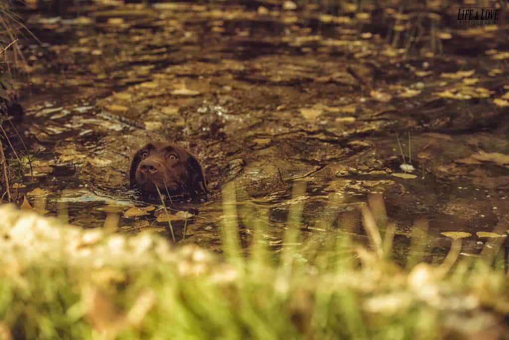 dentro del estanque