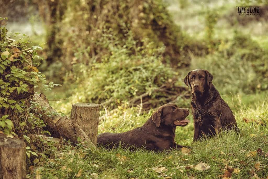 2 caninos en el parque