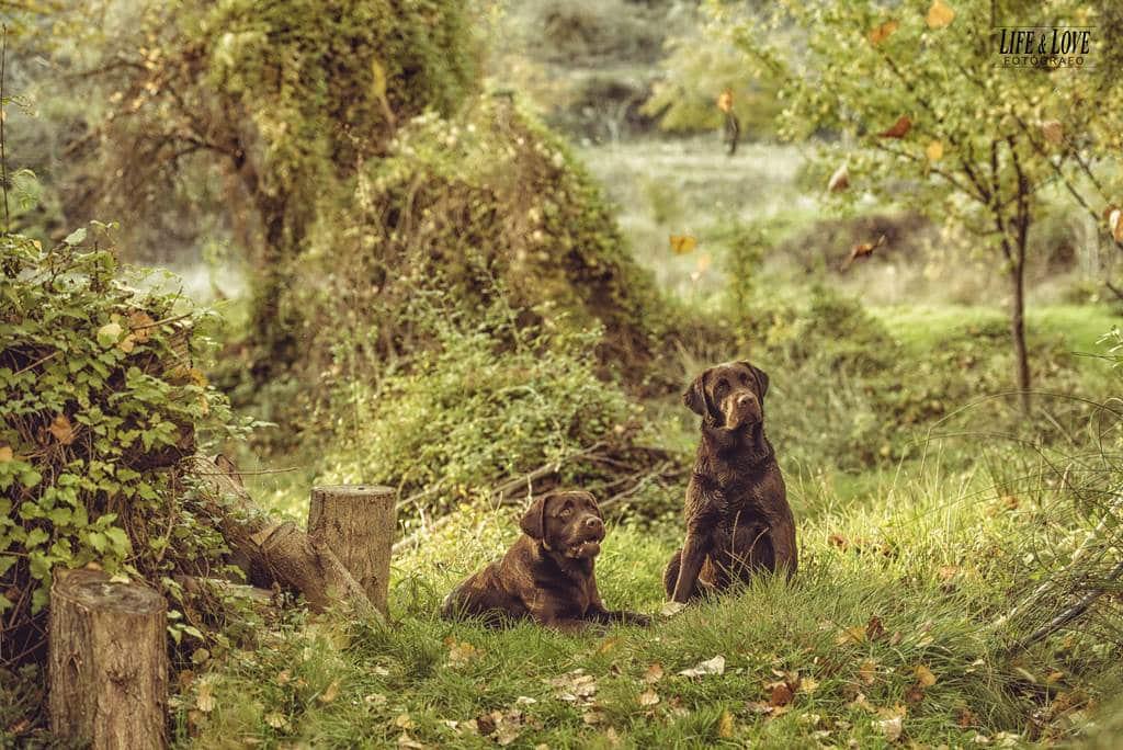 caninos juntos