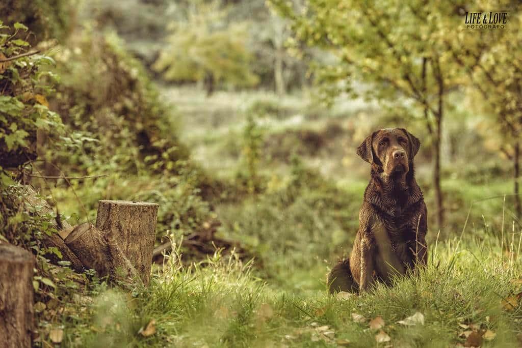 animal marrón