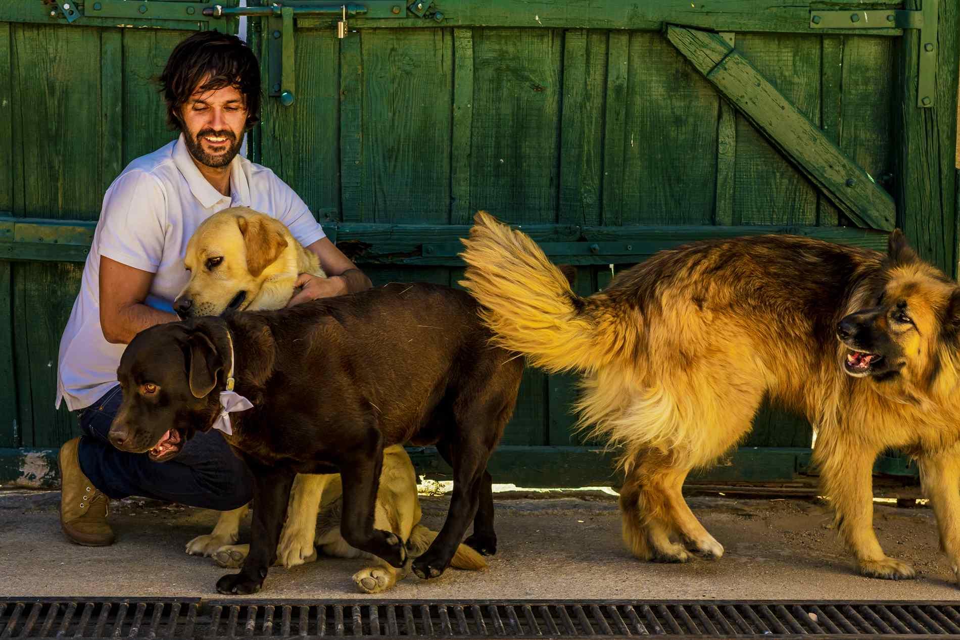 perros con el novio